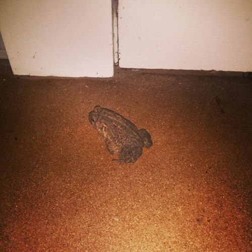 So I found this little guy in front of my door when I came home. If I kiss him will he turn into a prince. PrinceCharming Kissthegirl Frogprincess