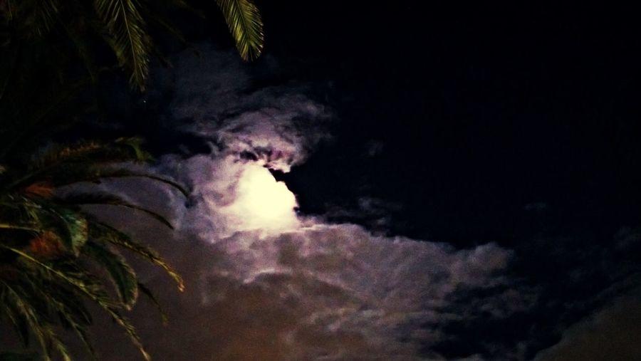 a bright moonlight evening