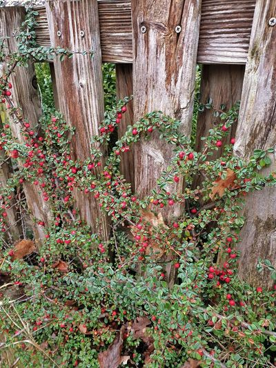 Flowering plants and trees by fence in front of building