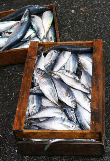 Korea Market Crate Day Fish Fish Market Food Freshness Healthy Eating No People Omega 3 Raw Food Seafood Silver Colored
