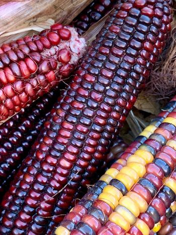 Cornharvest Indiancorn Red High Angle View Multi Colored Still Life For Sale No People Food And Drink Pattern Food