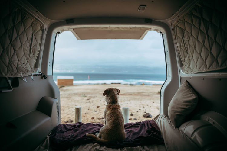 Gofio Vehicle Interior Sitting Mode Of Transportation Transportation Sea Relaxation Water Window Lifestyles Travel Day Nature Dog Outdoors Van Dog Love Pet Animal Themes Camping EyeEm Best Shots EyeEmNewHere EyeEm Nature Lover EyeEm Selects EyeEm Gallery EyeEm