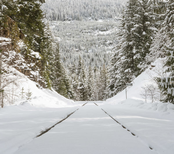 #beautifulbc #leadingtheway #supernaturalBC #traintracksinsnow Beauty In Nature Cold Temperature Day Forest Landscape Nature No People Outdoors Snow Snowing Tree Winter