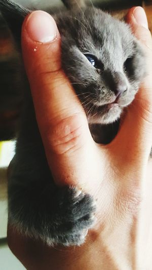 Cica Pets One Animal Animal Human Body Part Washing Human Hand Indoors  Animal Themes People One Person Adult Domestic Animals Mammal Close-up Cleaning Adults Only One Man Only Day Only Men First Eyeem Photo