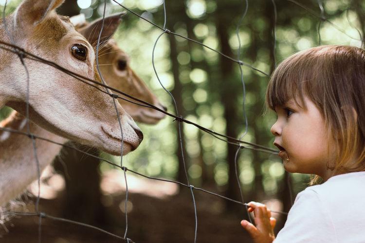 Close-Up Of Girl Looking At Deer