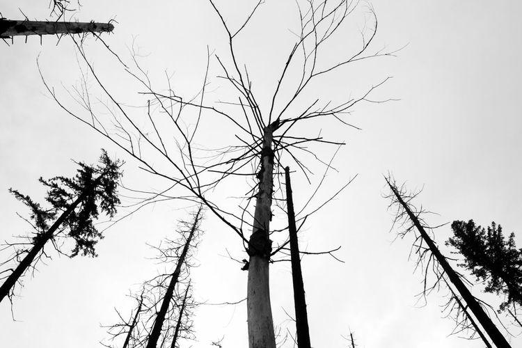 Tree Oregon Fire