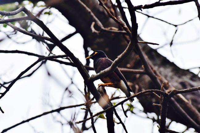 Bird Myna Brunch Around The World Nature Photography Naturelovers Nature_collection