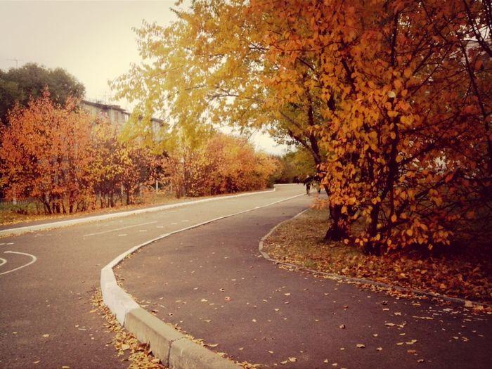 Orange nature school autumn sadness