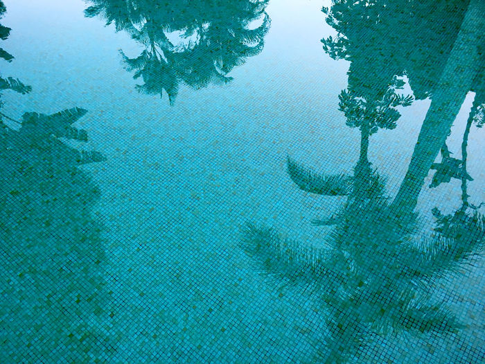 Backgrounds Beauty In Nature Blue Clear Day Low Angle View Luxury Nature No People Outdoors Reflctions Reflection Reflections In The Water Sky Summer Swim Swimming Swimming Pool Tree UnderSea Underwater Wallpaper Water