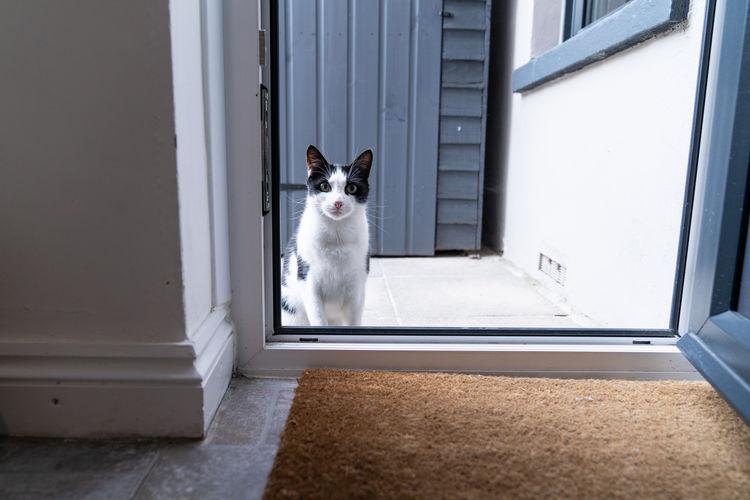 Portrait of cat sitting on window of building