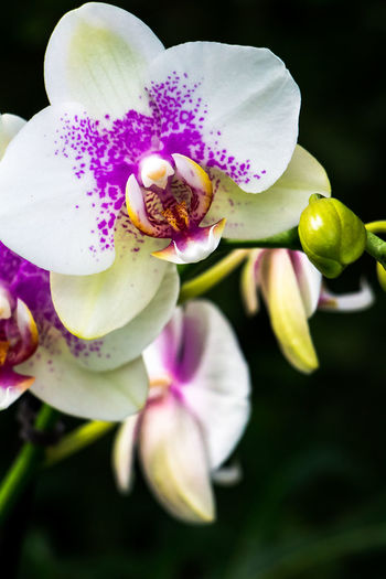 Orchid Beauty In Nature Bloom Close-up Color Exotic Flowers Flora Flower Flower Head Fragility Freshness Growth Nature Nature No People Orchid Orchid Outdoors Petal Petals Pink Color Plant Plant Purple Flower Romantic Violet Flowers