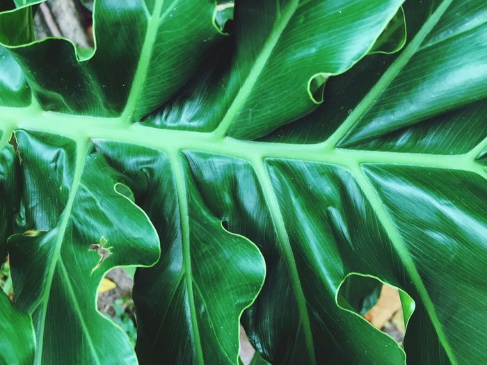 Curve of leaves Green Color Growth Leaf Plant Part Full Frame Backgrounds Plant Close-up Nature Pattern Natural Pattern Freshness Succulent Plant Beauty In Nature Leaf Vein