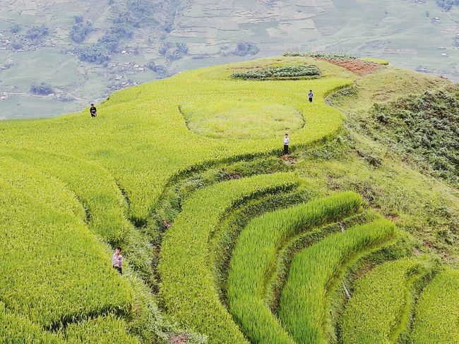 NorthVietnam Tavan  Landscape Rice Terraces Men At Work  Sapa, Vietnam Quiet Places