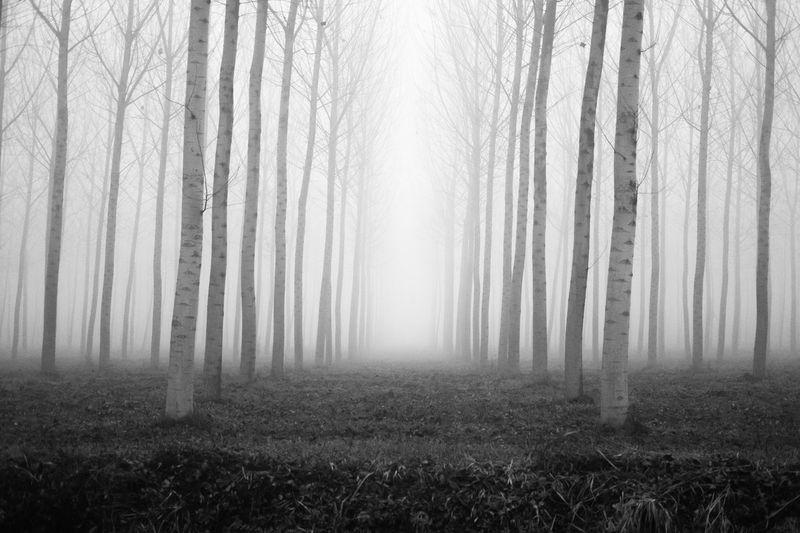 Mist Vertical