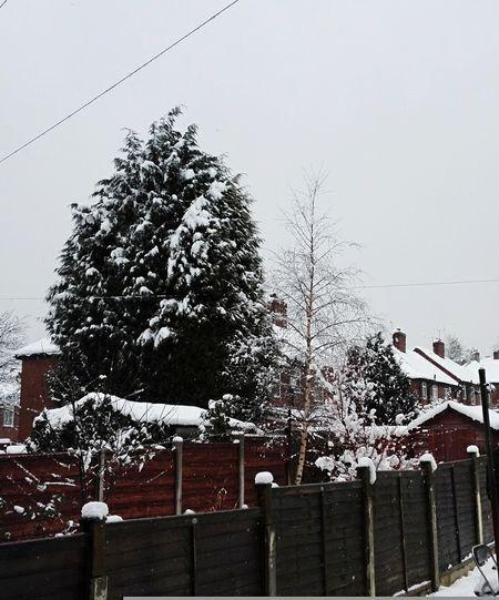 EyeEmNewHere Tree Outdoors No People Sky Christmas Tree Nature City Christmas Day Shades Of Winter