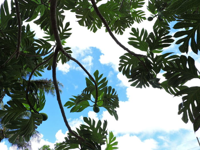 Beauty In Nature Branch Close-up Cloud - Sky Day Food Stories Green Color Growth Leaf Low Angle View Nature No People Outdoors Sky Tree