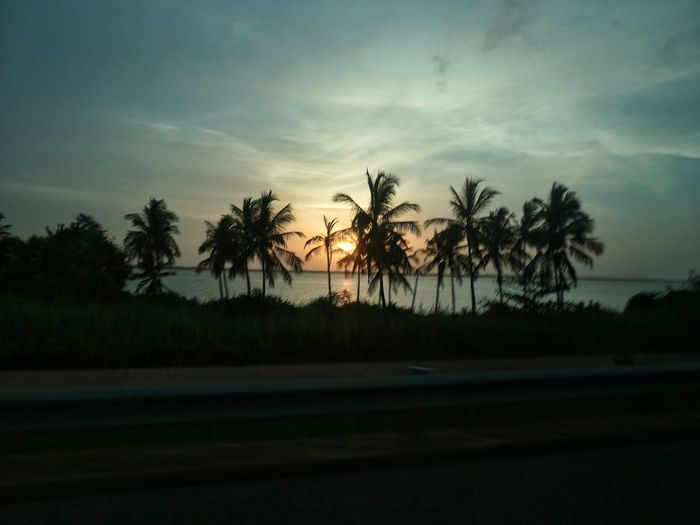 Sunset_collection Sunlight Desde El Coche In The Road Tree Water Palm Tree Sea Sunset Beach Sky Cloud - Sky Landscape Coconut Palm Tree