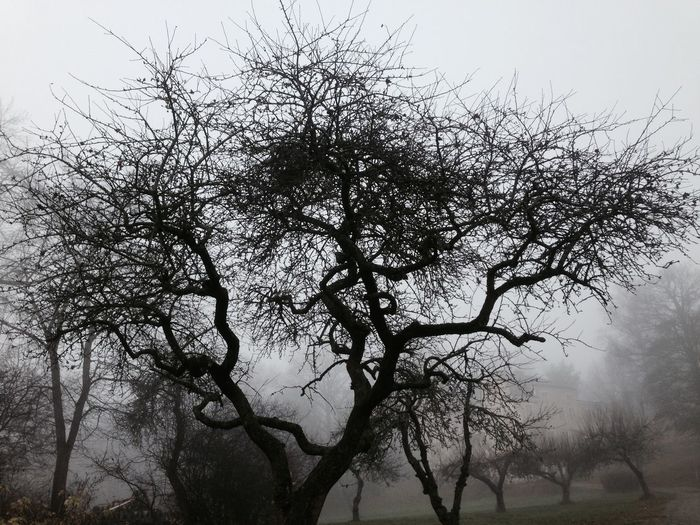 Bw_trees Foggy Morning Noedit Tree_collection  Winter Trees