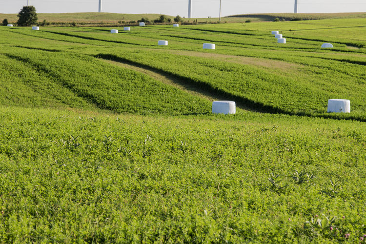 Green Agriculture Alfalfa Bale  Canon60d Canonphotography Farm Field Hill Rural Scene Silage Bale Wrapped