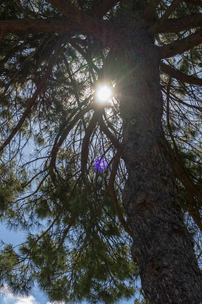 LOW ANGLE VIEW OF SUN STREAMING THROUGH TREE