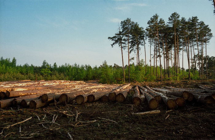 Bale  Block Clogs Cutting Cutting Trees Deforestation Deforestation Effect Deforestration Environment Environmental Damage Environmental Issues Forest Landscape Log Logs Nature Nature No People No People, Outdoors Timber Tree Tree