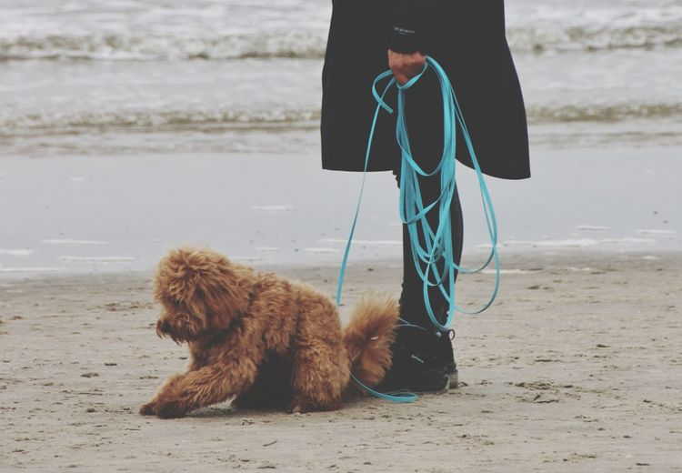 Low section of dog on beach