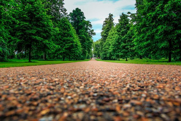 Hyde Park Green