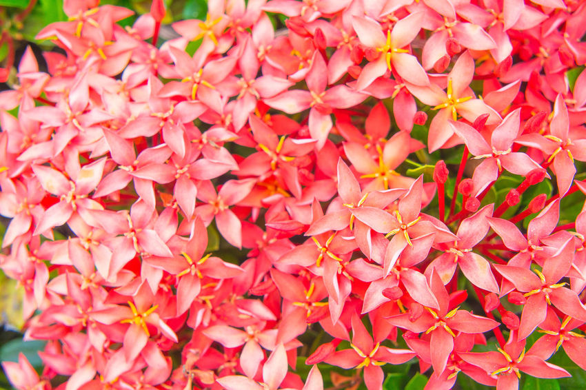 red flowers spike flower Backgrounds Beauty In Nature Close-up Day Flower Flower Head Fragility Freshness Garden Growth Nature No People Outdoors Petal Pink Color Plant Red Red Spike Flower Top View