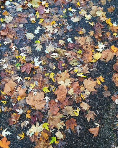 High angle view of maple leaves fallen on field during autumn