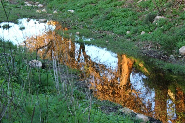 Water No People Outdoors Beauty In Nature Landscape Reflections In The Water Tree Peaceful Autumn Colors December Sun Malta