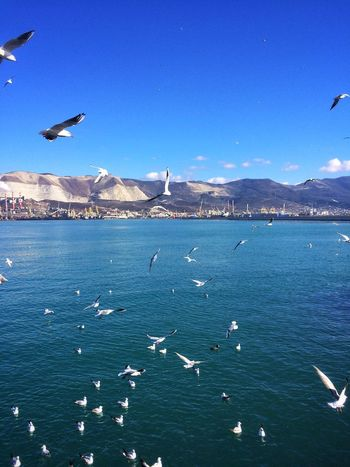 Mountain Flying Bird Animal Themes Sea Large Group Of Animals Animals In The Wild Water Seagull Outdoors No People Mountain Range Day Flock Of Birds Nature Mid-air Scenics Blue Sky Spread Wings