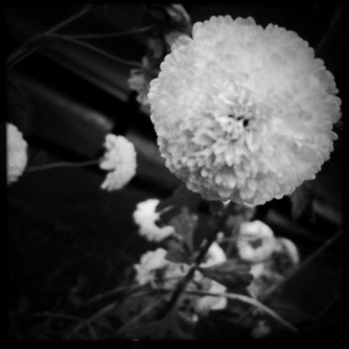 La memoria despierta entre mis labios NEM Black&white  Monocrome Black & White Flowerporn