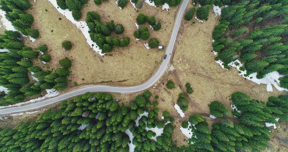 Aerial Photography Picea Abies EyeEm Forest Photography Nature Photography EyeEmNewHere EyeEm Best Shots EyeEm Nature Lover EyeEm Selects Forestphotography Forest Trees Tree Aerial View High Angle View Sand Planet Earth Plant Drone  Mountain Road Rocky Mountains