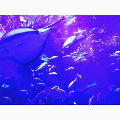 水族館 Blue No People Indoors  Close-up Water Day Aquarium UnderSea