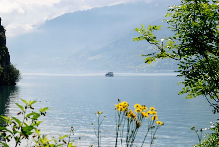 Beauty In Nature Blossom Calm Flower Fragility Freshness Growth Horizon Over Water In Bloom Majestic Nature Nautical Vessel Non-urban Scene Plant Scenics Sea Seascape Sky Tranquil Scene Tranquility Transportation Tree Vibrant Color Water Yellow