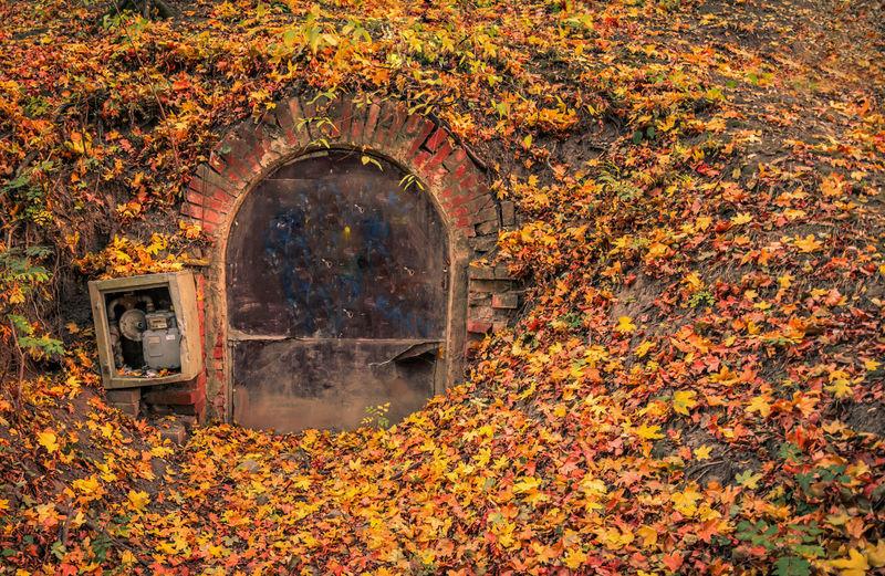 Sunlight falling on autumn leaves on field