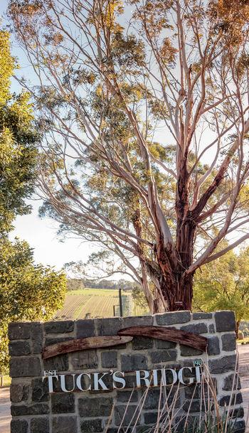 Tucks Ridge Estate, Red Hill, Mornington Peninsula, Australia. Banksia Growth Montalto Montalto Sculpture Prize Absence Built Structure Sculpture Springtime Tourism Travel Destinations Tree Trunk