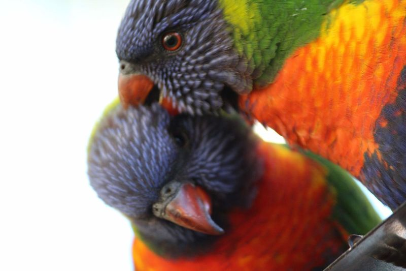Bird Rainbow
