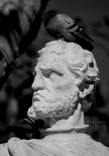 Well, I would have the same face...☺ En la Plaza de Oriente. Bnw_friday_eyeemchallenge angry Expressive Sculpture Black And White Eye For Details