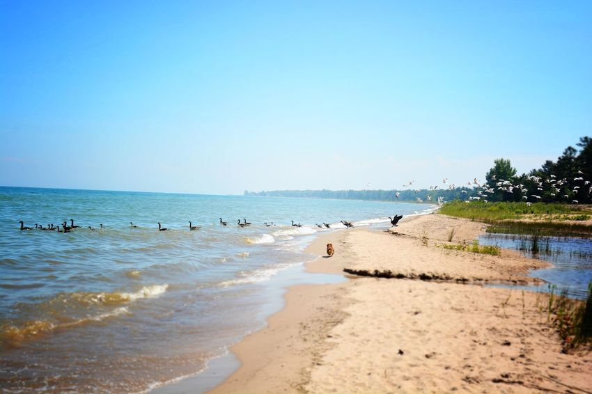 Heaven is a little bit closer at a cottage on the beach. #birds #birdsinflight #dog Beach Beauty In Nature Clear Sky Horizon Over Water Landscape Nature Outdoors Summer Tranquil Scene Wave