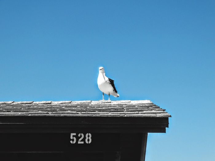Low angle view of seagull perching on roof against clear sky
