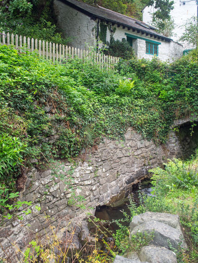 beautiful country cottage Bucks Mill Devon English Country Cottage Historical Building Picket Fence Architecture Building Building Exterior Built Structure Cottage Cottage Garden  Day Devon Cottage Green Color Growth House Nature No People Outdoors Plant Traditional Cottage Traditional Stone Wall Tree