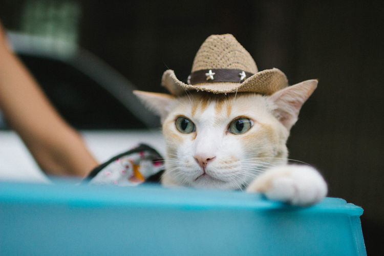 Pets Cat Domestic Cat Animal Body Part Selective Focus One Animal Close-up Cat Photography Cowboy Cowboy Cat
