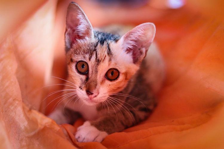 Close-up portrait of cute kitten