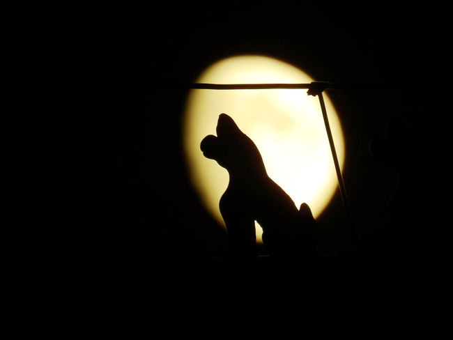 #moon Beijing Moon Animal Representation Animal Themes Black Background China Close-up Domestic Animals Domestic Cat Illuminated Indoors  Mammal Night No People One Animal Pets Silhouette Sunset EyeEmNewHere