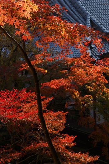EyeEm Nature Lover Nature_collection Landscape_Collection Autumn Red Tadaa Community Autumn colors