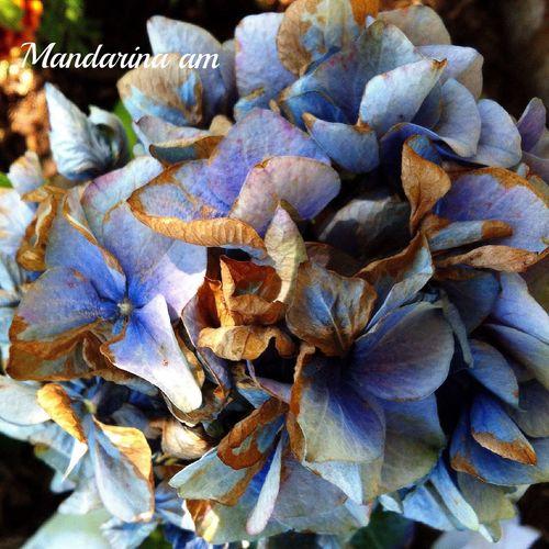 Flores Secas El Cubillo Segovia