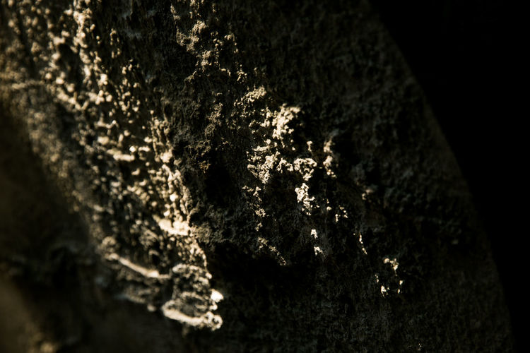 Close-up of tree trunk in cave