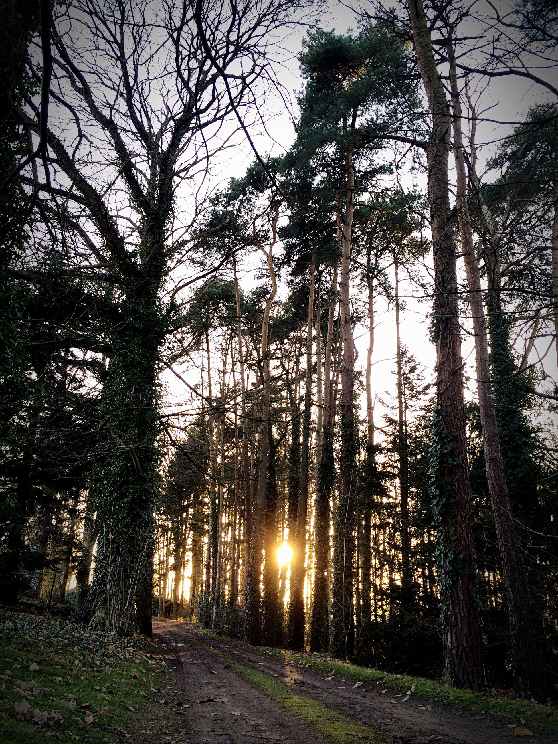tree, tranquility, tranquil scene, bare tree, nature, tree trunk, the way forward, scenics, branch, landscape, growth, beauty in nature, sunlight, sky, non-urban scene, silhouette, field, forest, sun, no people