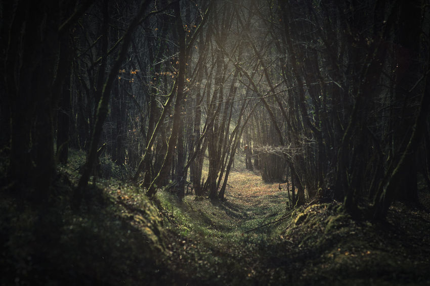 magical way Forest Nature Trees Tree Magic Magical Outdoors Way Walking Taking Photos Taking Pictures Getting Inspired Getting Creative Ambiance Scenics Light And Shadow Light Shadow Eye4photography  Outdoors Freshness Nature Photography Nature_collection Nature On Your Doorstep Foliage